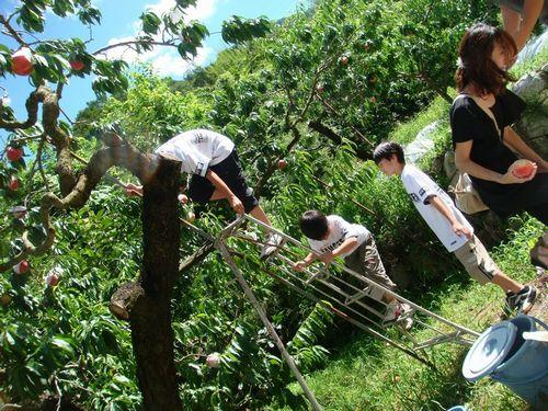 富士山富士五湖周辺近く桃狩り食べ放題時間無制限人気農園