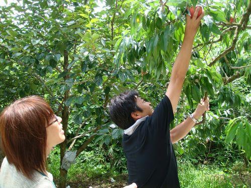 富士山富士五湖周辺近く桃狩り時間無制限食べ放題人気おすすめ農園