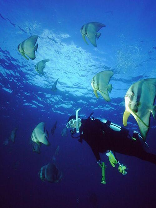 沖縄那覇市ダイビングショップ未経験者初心者高齢者向け潜水どうでしょう口コミ評判おすすめしたい理由