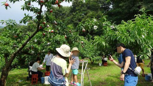 御坂もぎたてでジューシーな桃を食べ放題できる桃狩り子供が喜ぶおすすめ農園