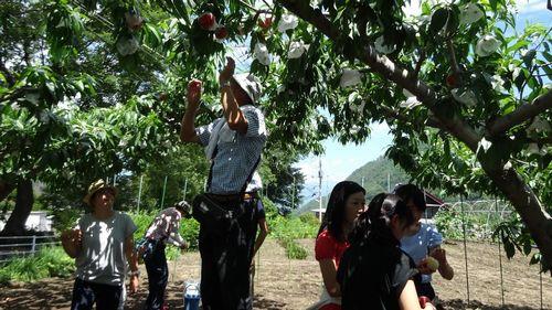 御坂子供が喜ぶおすすめ農園もぎたてでジューシーな桃を食べ放題できる桃狩り