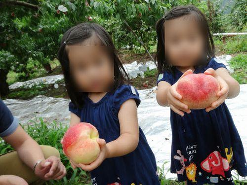 御坂子供が喜ぶおすすめ農園もぎたてジューシーな桃を食べ放題できる桃狩り