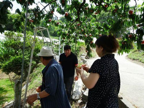 一宮御坂の評判の良い桃狩り農園美味しい格安食べ放題