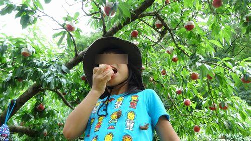 山梨御坂初めての桃狩り食べ放題できる果物狩りフルーツ狩り観光園直売所の選び方のポイント