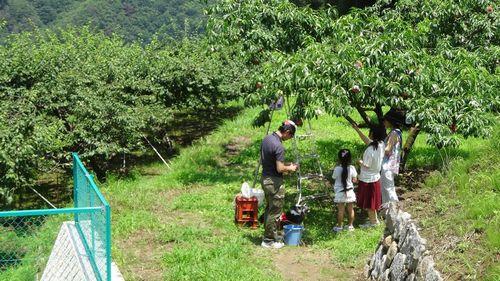 山梨御坂初めての桃狩り制限なく食べ放題できる果物狩りフルーツ狩り観光園直売所の選び方のポイント