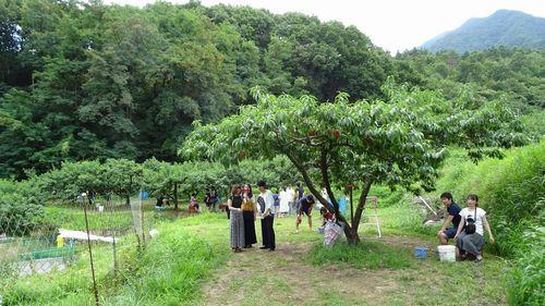 2019年おすすめの桃狩り食べ放題できる山梨御坂町農園農場時間制限なしで家族で楽しめる