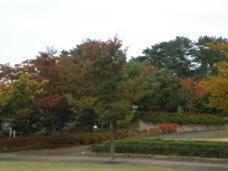 siyakusho-kouen