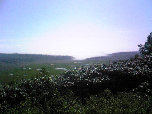 湿原です。