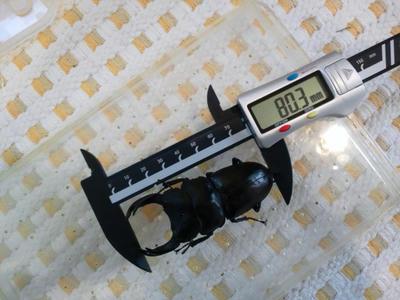 matsuno-80mm.jpg