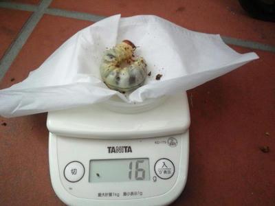 2012.12.maki004.jpg