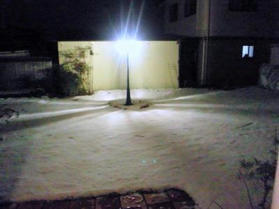 2013.01.yuki.jpg