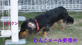 wan_mail_01.JPG