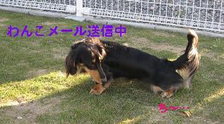 wan_mail_02.JPG
