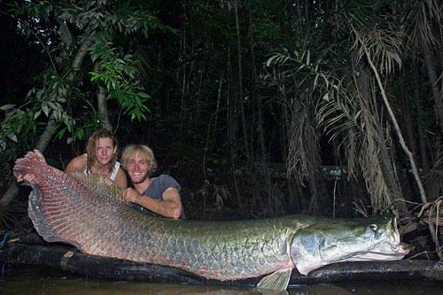 世界一大きい淡水魚