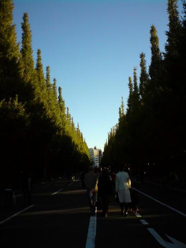 絵画館前の銀杏並木はまだ青々として。