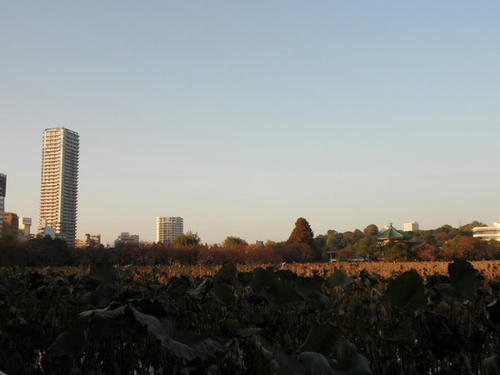 左にそびえるのが中尾彬さん在住のマンションですw