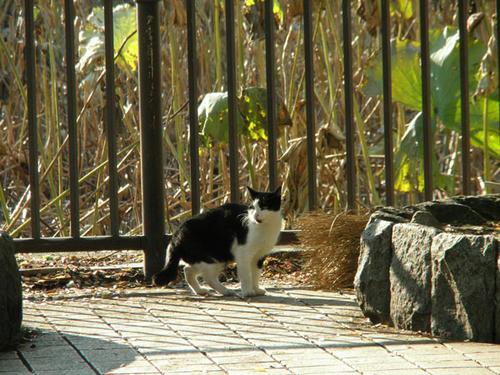 鳴き声が異様に可愛いネコでした(*´∀`*)