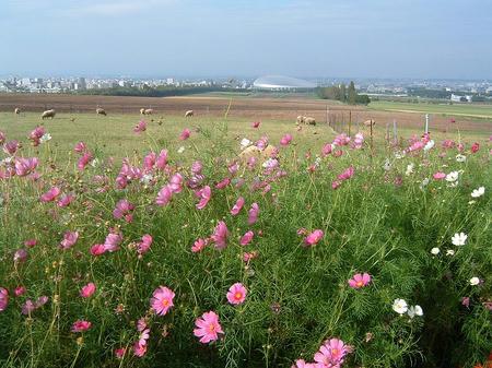 花、羊、札ド