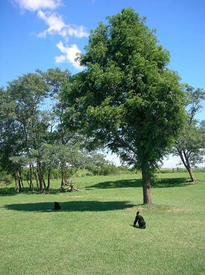 今日はこの木の下にシートを敷いてピクニック風サンポ