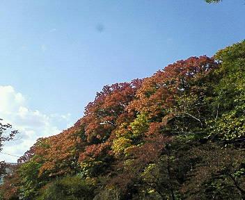 秋ですねぇv