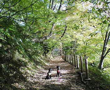落ち葉の絨毯と狭い道がとっても楽しかった~♪
