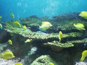 僕らは群れを泳ぐ魚たち・・・・・