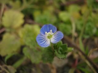 勝手に生えて咲いた花(1)
