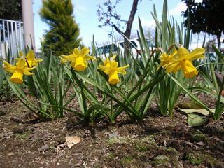 とある春の日の光景(1)
