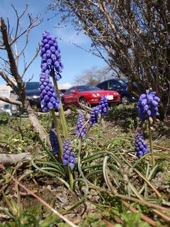 とある春の日の光景(3)