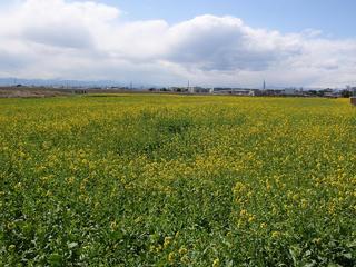 とある春の日の光景(4)