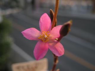 アナカン花で、ウヒヒヒヒ (1)