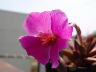 アナカン花で、ウヒヒヒヒ (2)