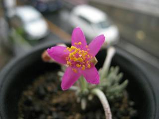 アナカン花で、ウヒヒヒヒ (5)