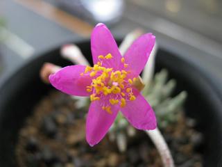 アナカン花で、ウヒヒヒヒ (6)