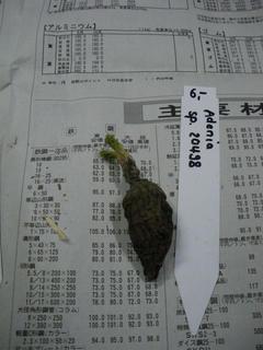 フォルさんからのイモ便♪ (3)