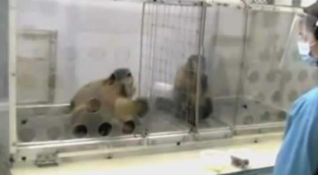 猿の実験。一匹には「ぶどう」を与え一方には「きゅうり」。結果⇒不当な扱いにキレる