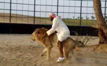 それ猫じゃないのよ!。ライオンよ。ライオンと思いっきり戯れてるアラブ人