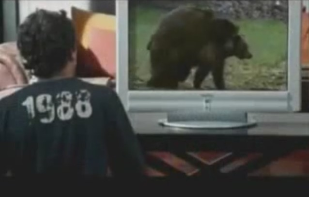 自然の熊が交尾しているシーンを見てやっていることとは?