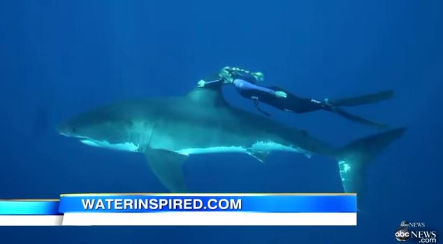 サメの背びれに捕まって回遊する女性。
