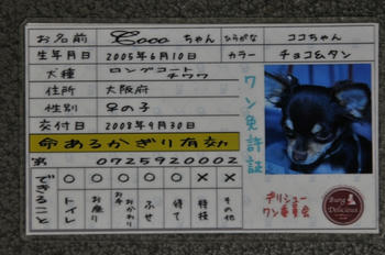 DSC_3463.JPG