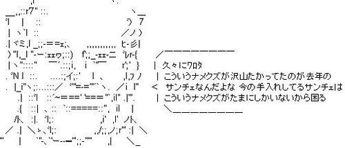 _fan7.JPG