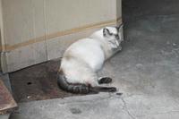 寝ているおネコ。