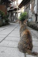 日本にはネコやね。