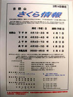 吉野山桜情報