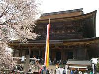 吉野桜蔵王堂