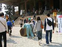 吉野桜蔵王堂2