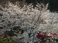 吉野山09-1