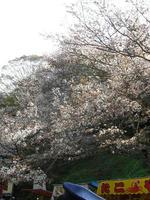 吉野山09-2
