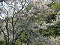 吉野山09-3