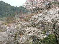 吉野山09-5